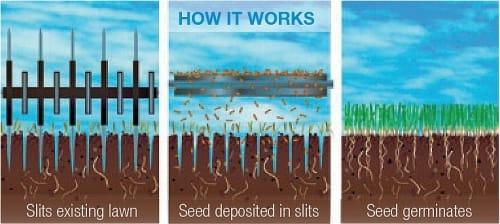 slit seed